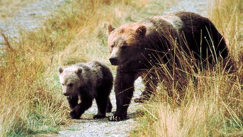 Unterwegs in Westkanada - Von Goldgräbern und Grizzlybären