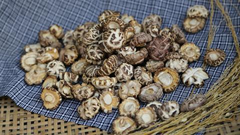 Kleine Shiitake-Pilze in einem geflochtenem Korb mit Tuch.