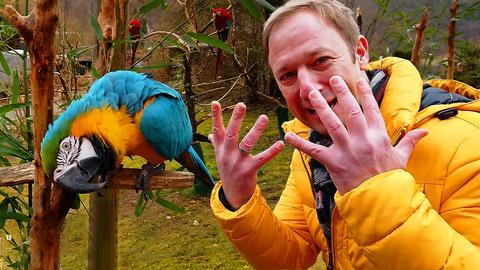 Tobi Kämmerer mit Papageien