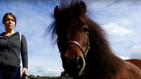 Muffin Pony