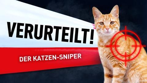 Eine Katze im Visier eines Gewehrs