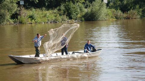 Mainfischer bei der Arbeit: Auswurf des Wufgarns vom Boot auf dem Main.