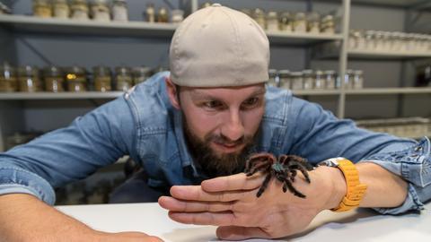 Robert Lehmann mit Spinne