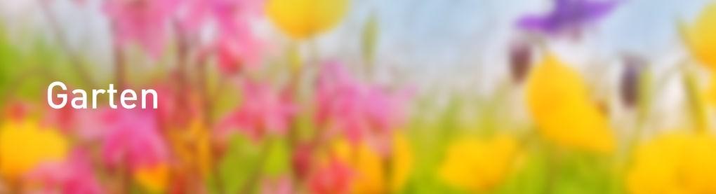 Blumen neben einer Wiese