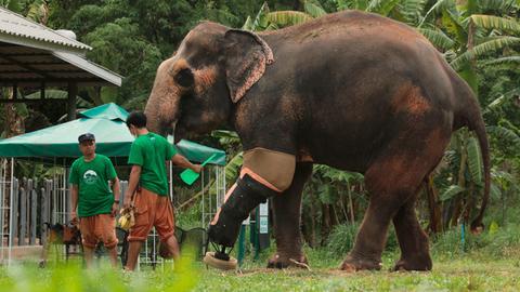 Das Elefantenkrankenhaus von Thailand