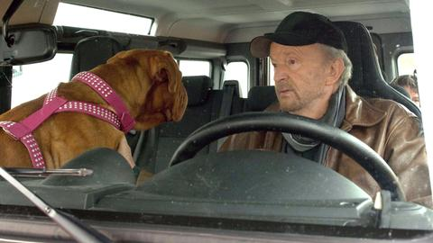 Uli (Michael Gwisdek) will es wissen: Welches seiner drei Kinder ist nicht von ihm? Mit Familienhund Walter macht Uli sich auf, die Wahrheit aufzudecken...