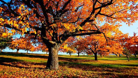 Herbst in Deutschland - das Jahr neigt sich dem Ende zu. Noch ein letztes Mal zeigt sich die Natur in aller Pracht, wenn sich die Blätter verfärben. - Obstbäume auf einer Streuobstwiese.
