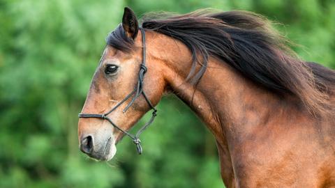 Pferde sind hochsensible Geschöpfe, die wesentlich zur Genesung kranker Menschen beitragen können.
