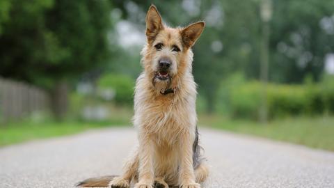 Hund Racko ist der Hauptdarsteller in der neuen Kinderserie im Ersten.