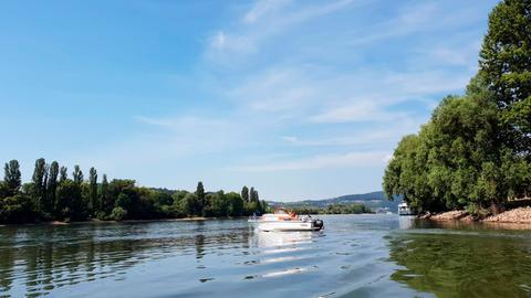 In den Auen des Rheins.