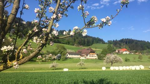 Landschaft am Kaiserstuhl.
