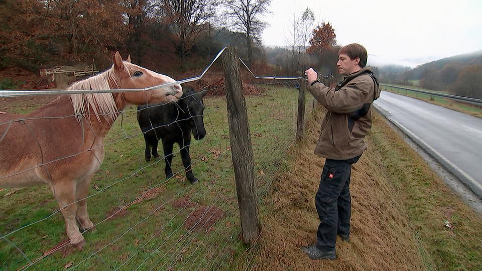 Der Amtstierarzt Mario Zimmer aus Gelnhausen hat täglich mit Tieren in Not und ihren Besitzern zu tun.