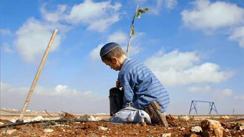 Ein kleiner Junge pflanzt einen Baum im Westjordanland.