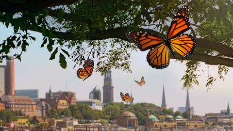 Orangene Schmetterlinge fliegen in der Luft, im Hintergrund ist die Skyline von Frankfurt zu sehen. Es herrscht ein idyllischer Eindruck.