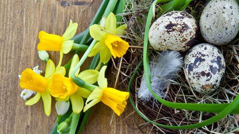 Rustikaler Holzuntergrund mit Frühlingsblumen und Osternest.