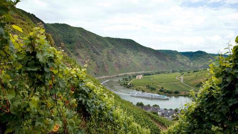 Von den steilen Weinbergen über dem Moselort Bremm hat man einen herrlichen Blick auf die Moselschleife. Hier befindet sich der Bremmer Calmont – der steilste Weinberg in Europa.