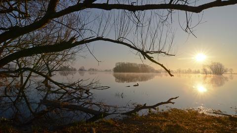 Sonnenaufgang am Bölsdorfer Haken bei Tangermünde. Die überschwemmten Elbauen sind die Heimat von Bibern, Fischottern und Kranichen.