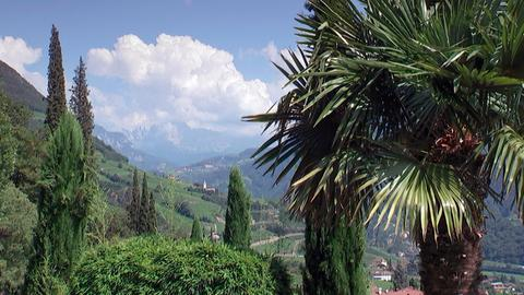 Landschaft mit Palmen in Südtirol.