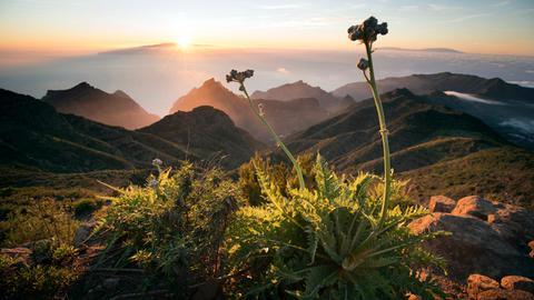 Teneriffa ist mit 2.000 Quadratkilometern die größte der Kanarischen Inseln.