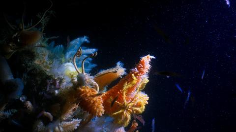 Bei Dreharbeiten in der Tiefsee der Antarktis entdeckten das Team Riesenschwämme, die bis zu 2 Meter groß waren.