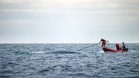 John Calambokidis und sein Team von Cascadia Research befestigen einen Sender mit Saugnäpfen an einem Blauwal. Sie wollen Informationen sammeln um herauszufinden, warum die Tiere die Hauptschifffahrtswege vor der kalifornischen Küste nicht meiden.