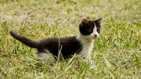 Schwarz-weiße Babykatze auf einer Wiese.