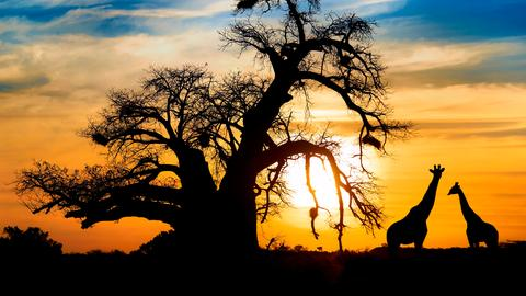 Entdeckungstouren im Süden Afrikas - Botswana, Namibia und Südafrika