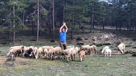 Coach Tobi steht vor einem Wald inmitten einer Schafherde und hebt die Hände in die Luft.