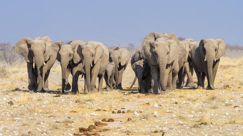 Eine Elefantenherde in der Wüste