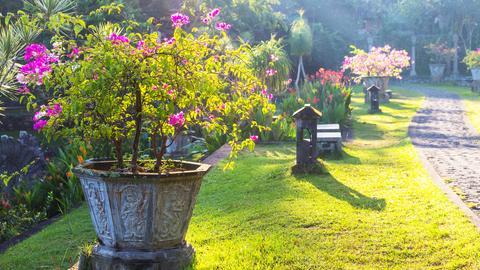 Garten mit blühenden Pflanzen