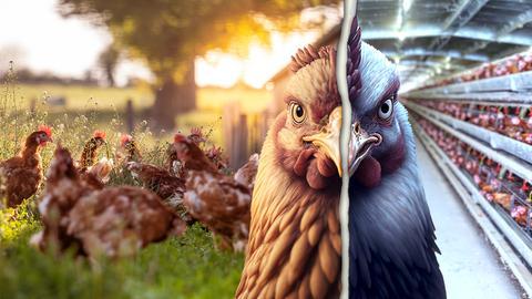 Protagonist läuft mit einem Eimer über eine Rinderweide. Im Hintergrund sind dunkle Rinder zu sehen.