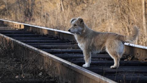 Struppiger Hund steht auf Bahngleisen