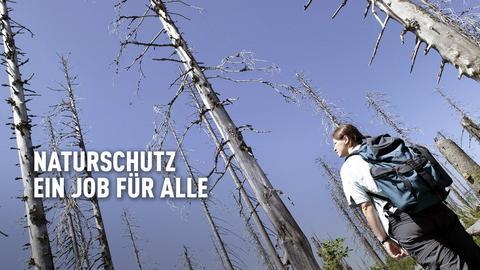 Eine junge Frau mit Rucksack steht in einem toten Wald und schaut den kahlen Stamm entlang nach oben in den blauen Himmel.
