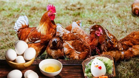Braune Hühner im Gras. Im Vordergrund eine Schüssel mit Eier auf Holzgrund. In einer weiteren Schüssel ein aufgeschlagenes Ei und Eierschalen daneben. Rechts unten ein hartgekochtes und gepelltes Ei, dekoriert als Hühnchen.