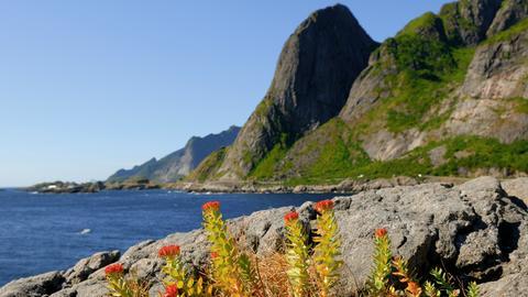 Durch die Wildnis_Norwegen_Küste