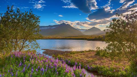 Blick auf Berge über blühende Wiesen und einen See.