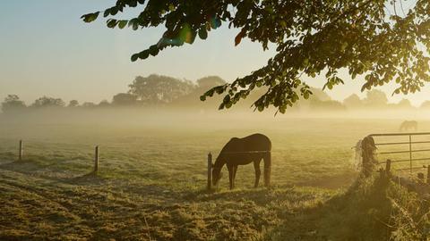Pferd an einem Wintermorgen auf der Weide