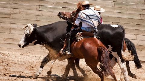 Rodeo mit Stier.