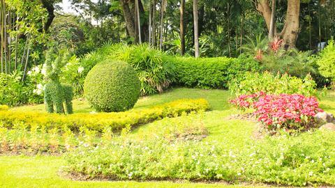 Schöner blühender Garten