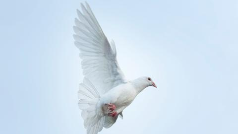 Eine fliegende weiße Taube