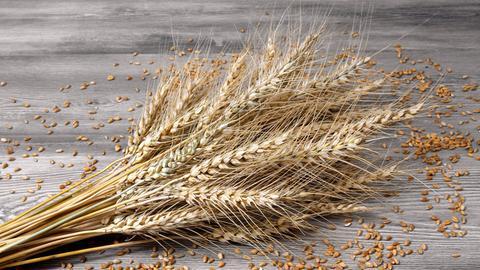 Weizenähren und -körner