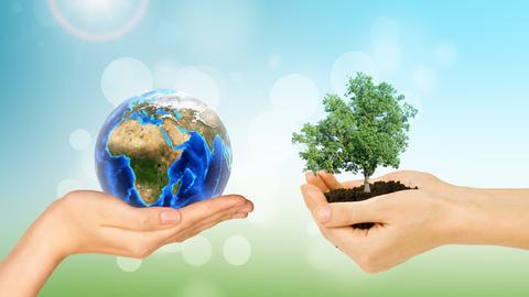 Schützende Hände mit Weltkugel und Baum